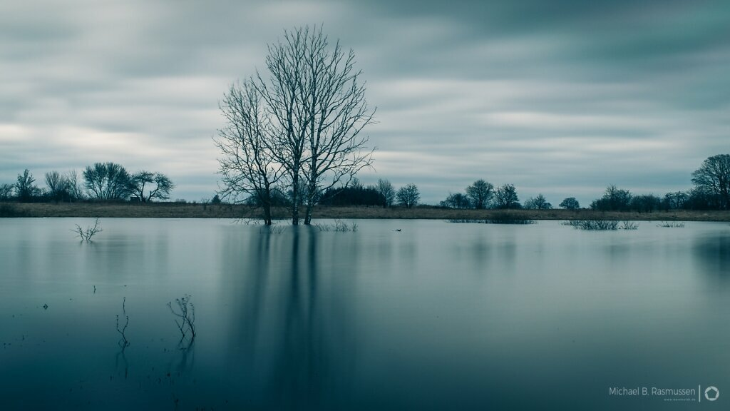 The tree in the lake