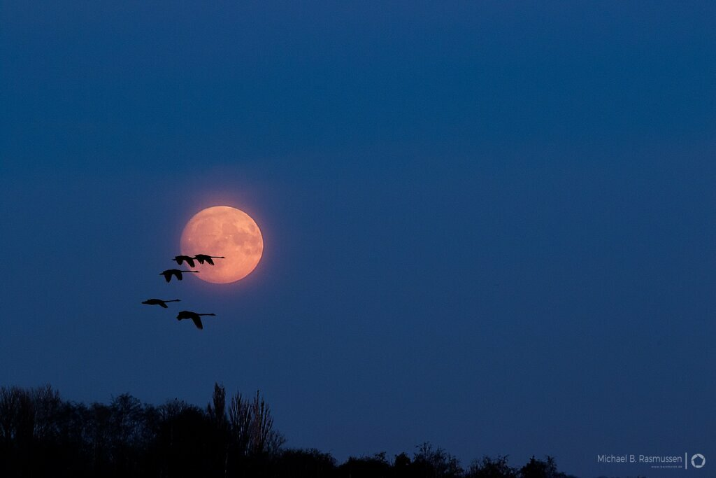 Supermoon Nov 2016