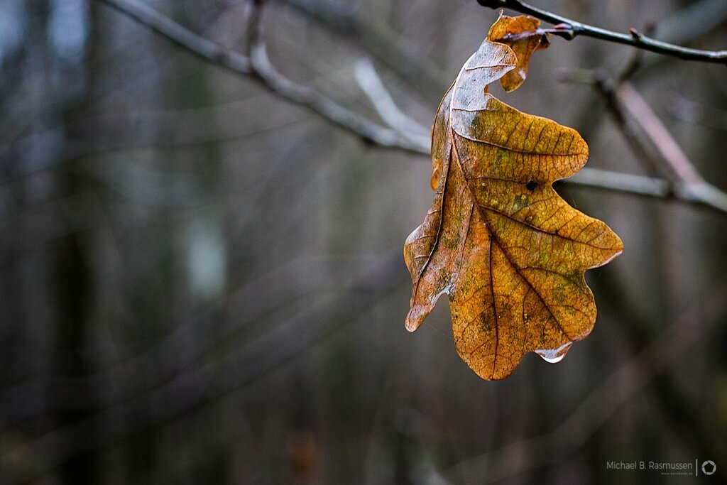 Winter Leaf