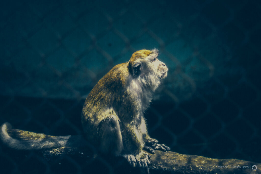 Monkey in zoo