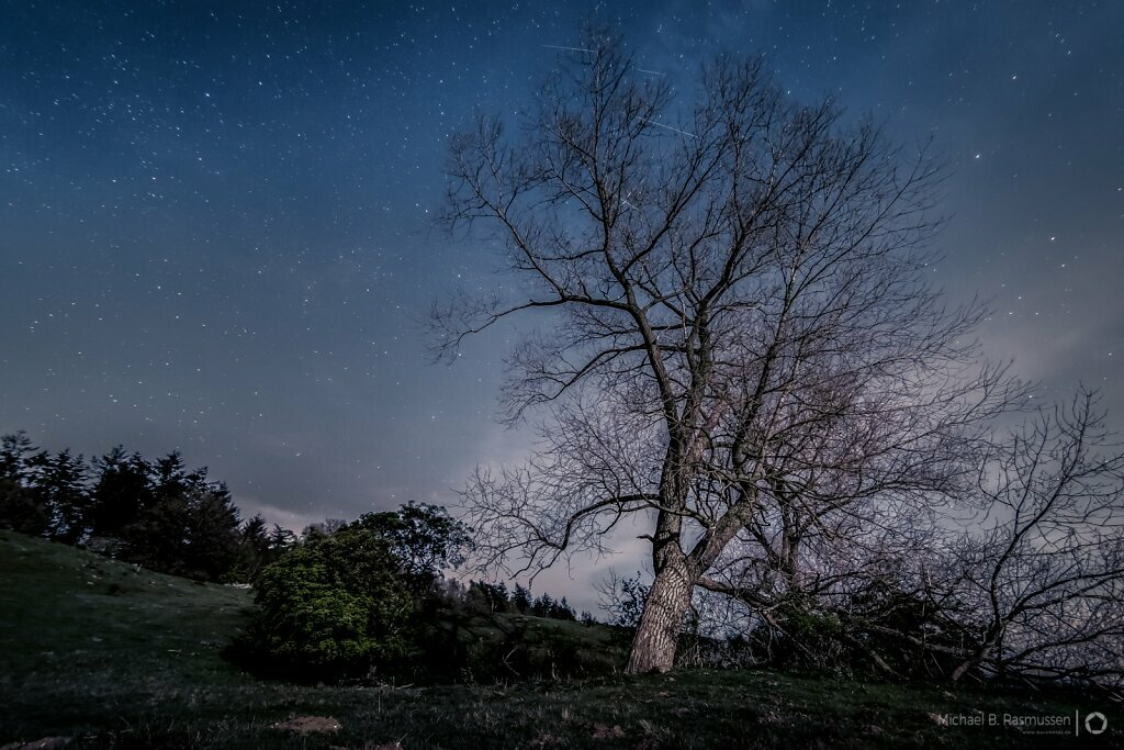 Meteors over the tree