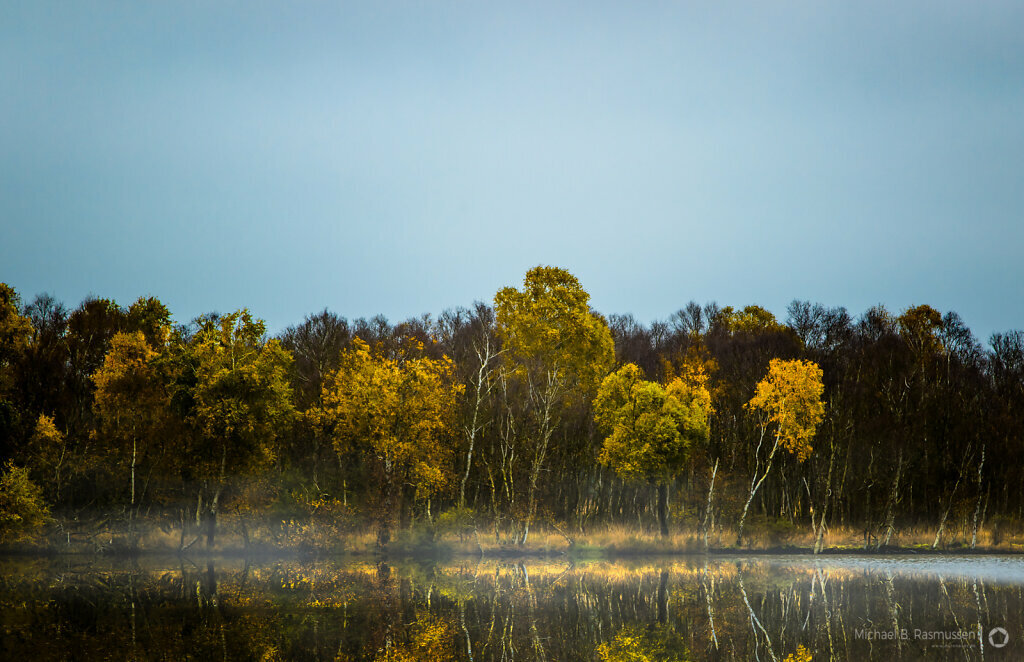 Autumn in the bog