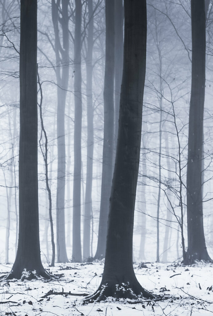 Wintery forest