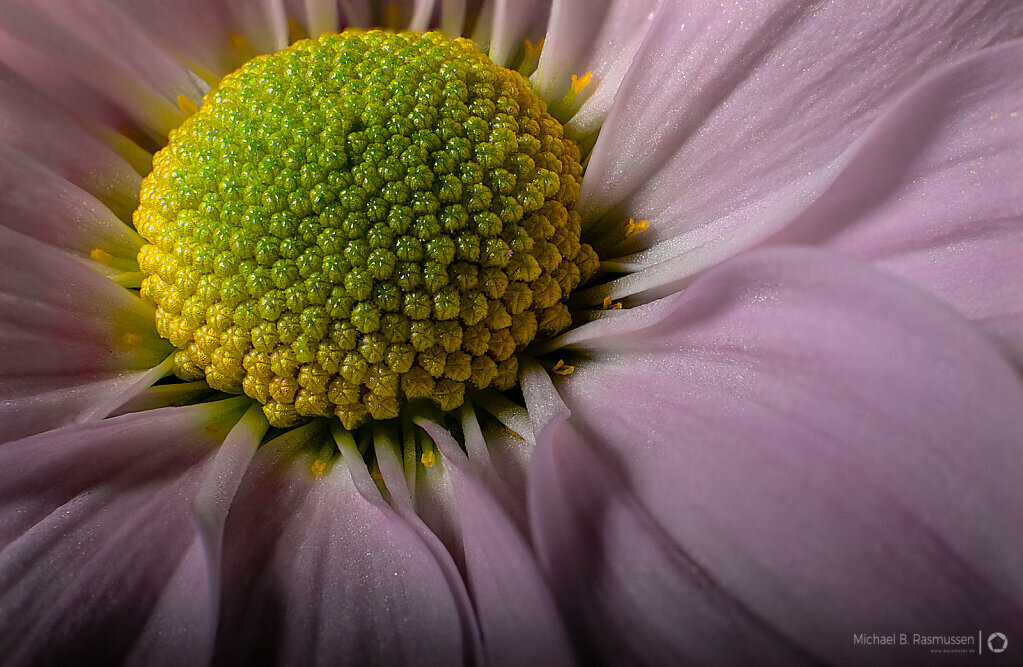 One flower 5 Images